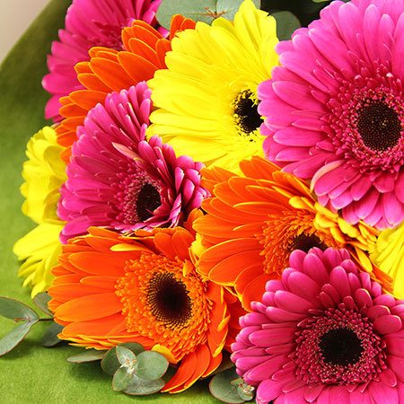 Bright Gerbera Flowers