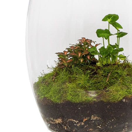 Terrarium Forest Delivery Sydney