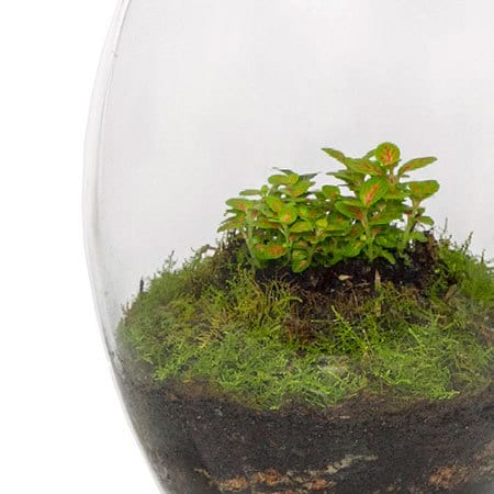Terrarium Plant Delivery in Sydney