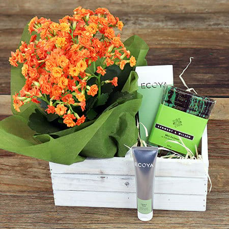 Mint Infusion Gift Hamper Delivered