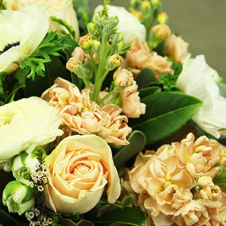 Apricot Cream Flowers Delivered