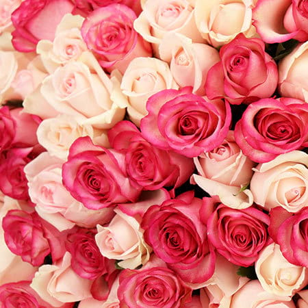 Pink Roses Delivered Sydney