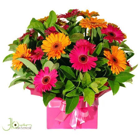 colourful-gerbera-box