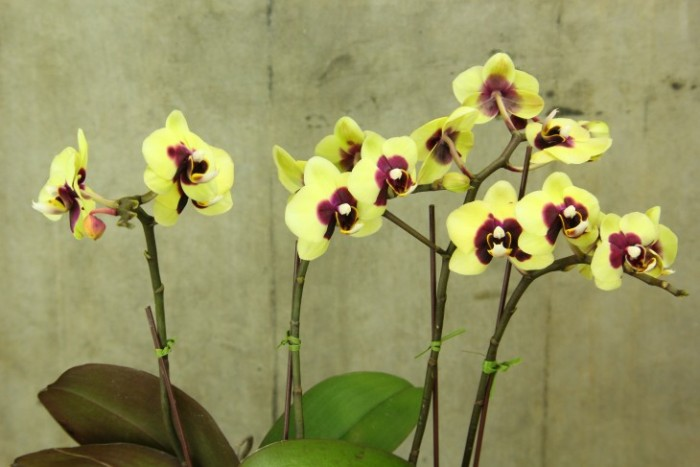 Orchid Plant Care Tips