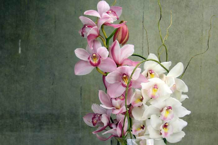 Hot Special on Winter Orchids!