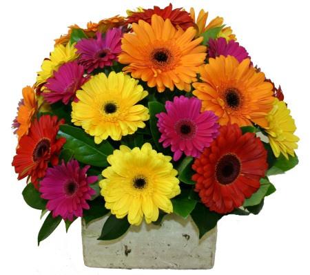 spring-gerberas-flowers