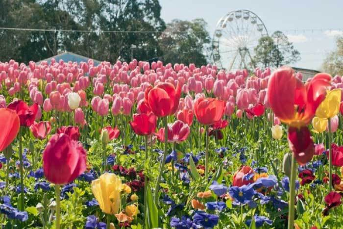 Spring Flower Festivals in Australia 2015