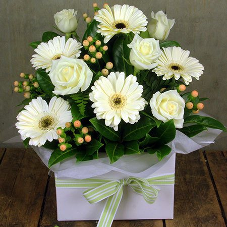 All White Sympathy Box