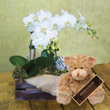 Bear Amongst the Orchids (Sydney Only)