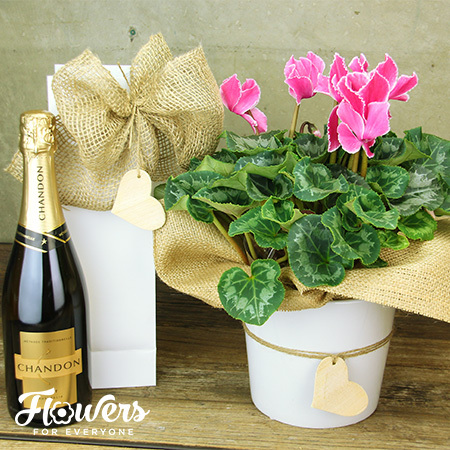 Chandon and Cyclamen
