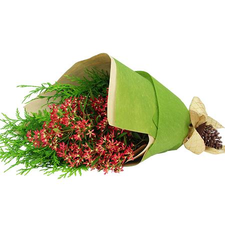 Festive Native Christmas Bush and Fresh Pine Posy Delivered in Sydney