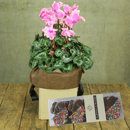 Cyclamen and Chocolate Bunnies (Sydney Only)