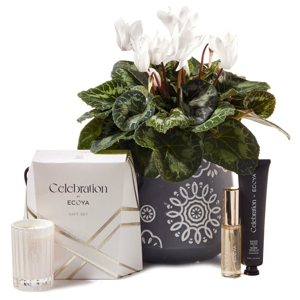 White Cyclamen in Copper Pot Delivered
