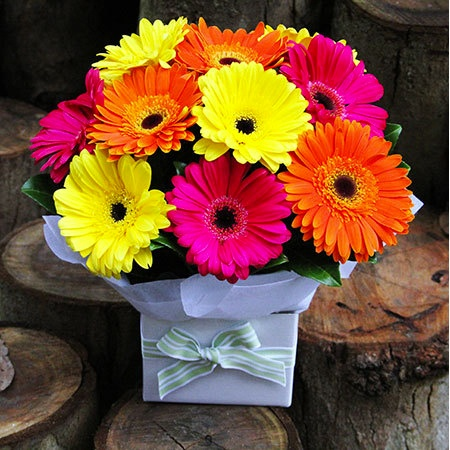 Sydney Only Deal Gerbera Box