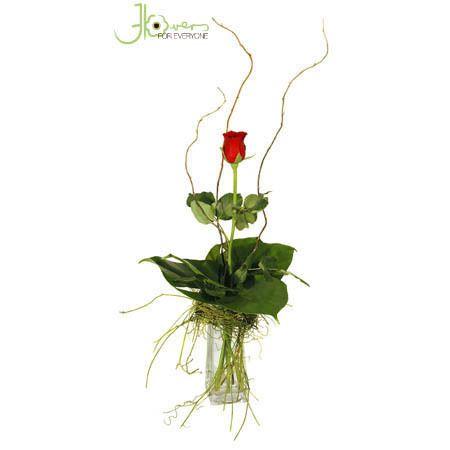 single-red-rose-in-vase