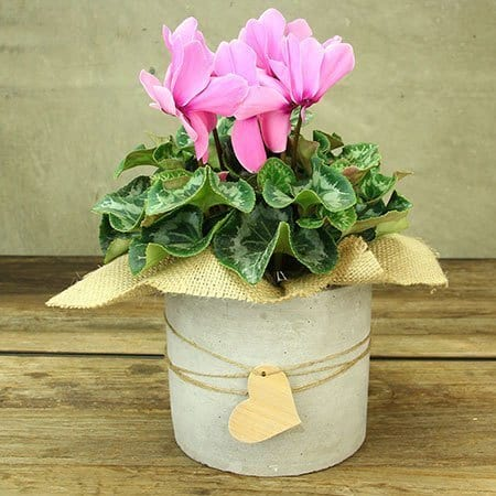For Green Thumb Mums