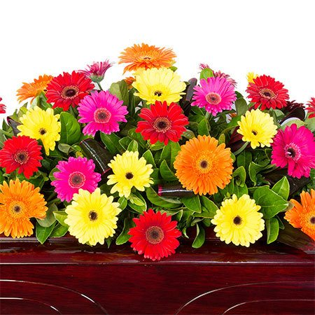 Funeral Casket Flowers - Colourful Gerberas