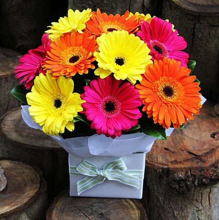 Gerbera Daisies Boxed Flower Arrangement