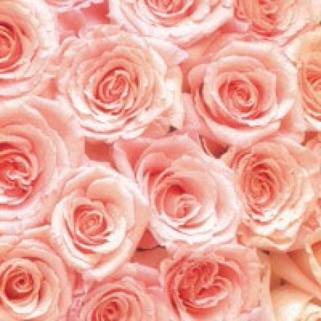 Gift Card Pink Roses