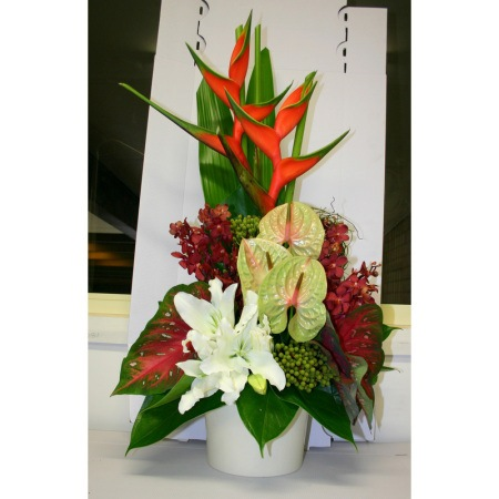 christmas-aura-christmas-flowers