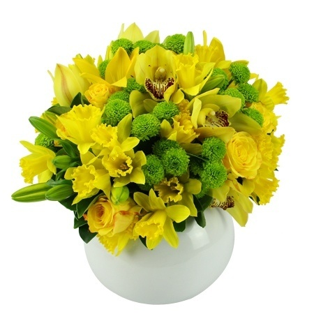 Hope - Daffodil Day Range