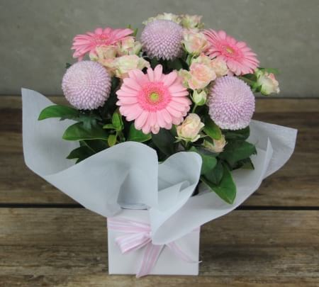 HOS-PINKBOX - Pink Box