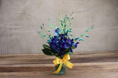 HOS-SOBLUEJAR - Singapore Orchids Blue Jar