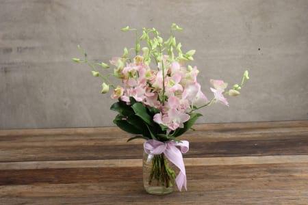 HOS-SOPINKJAR - Singapore Orchid Pink in Jar