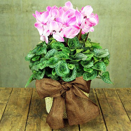 Large Cyclamen Basket