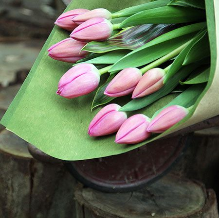 Le Petit Tulip