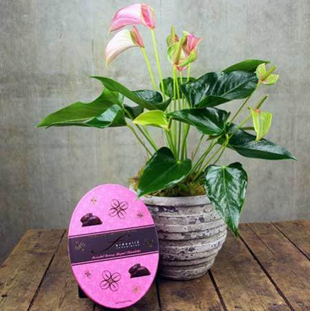 Lily Plant & Easter Chocolate