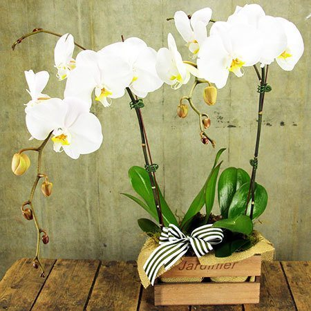 Orchid Plants in Timber Crate