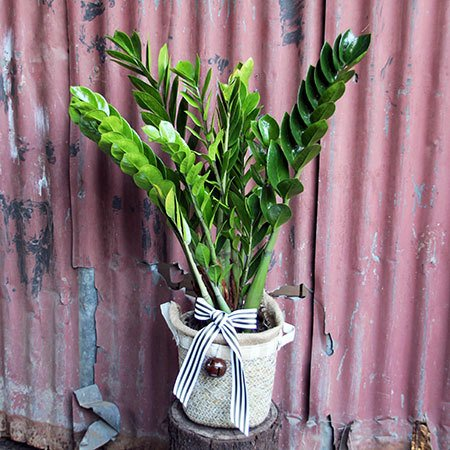 Nuovo Xmas Tree