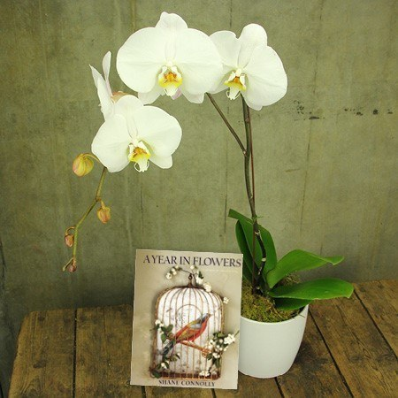 Orchid and Book (Sydney Only)