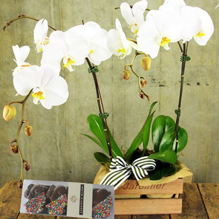 Orchid and Chocolate Bunnies (Sydney Only)