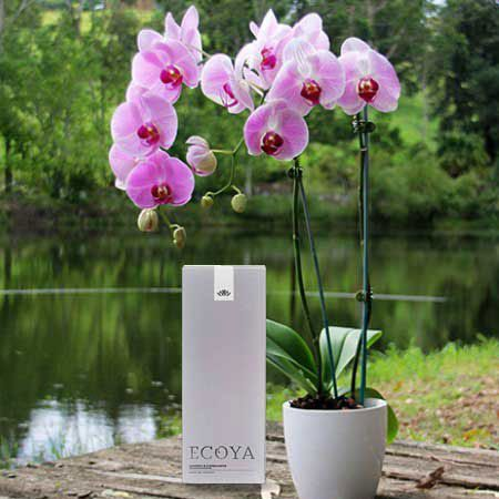Orchid and Ecoya Reed Diffuser with Free Candle (Sydney Only)