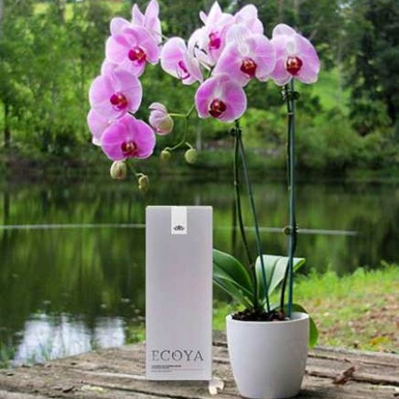 Orchid Love & ECOYA Reed Diffuser