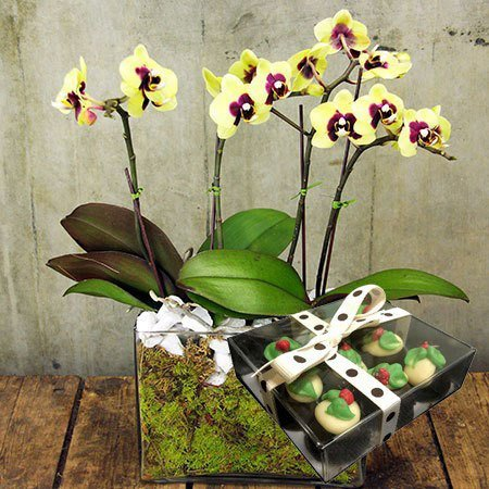 Orchids and Xmas Chocolates (Sydney Only)