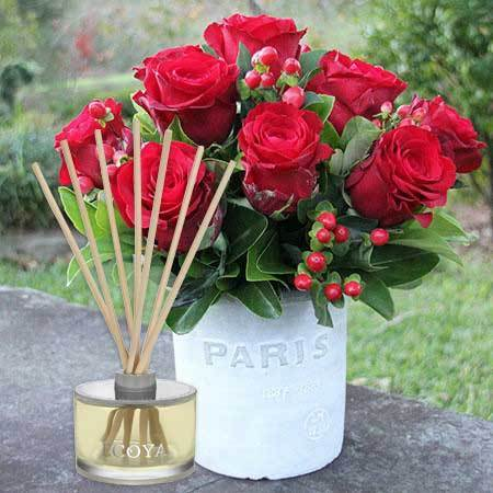 Red roses in pot for Valentines Day