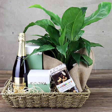 Peace Lily Pamper Hamper