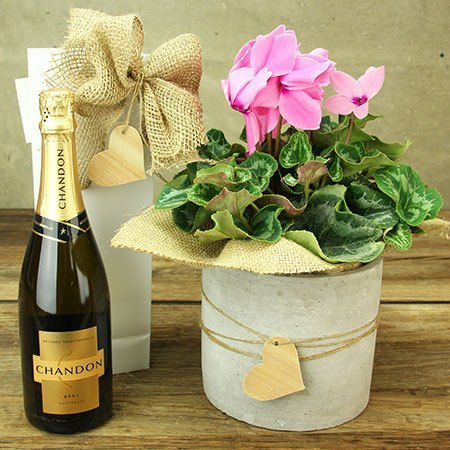 Pink Cyclamen and Bubbly Delivered
