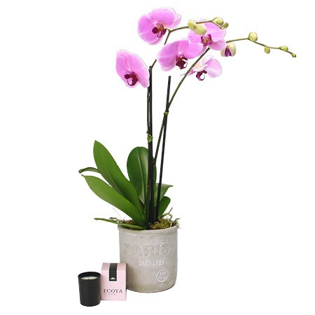 Pink Orchid for Mum
