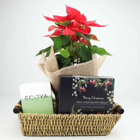Poinsettia and French Pear Christmas Hamper