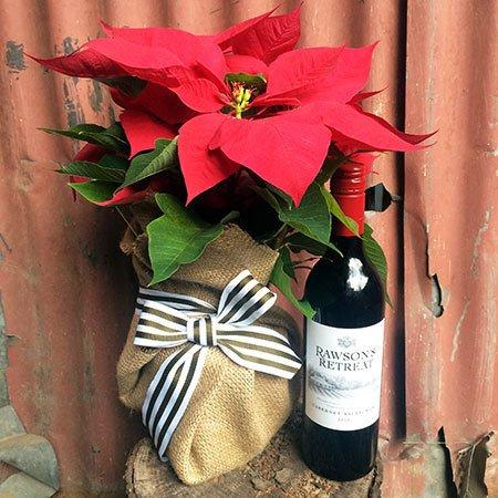 Poinsettia & Vino