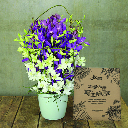 Purple and White Orchids with Free Chocolate Truffles (Sydney Only)