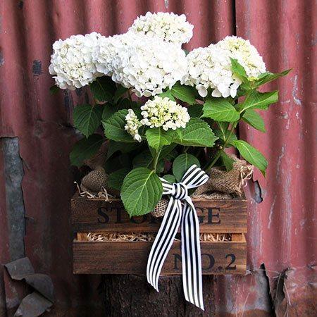 Rustic Hydrangea Box (Sydney Only)