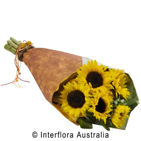 SA55 SONNY Wrapped Sunflowers