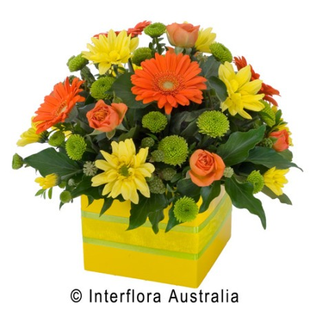 SA56 LISETTE Bright Petite Box Arrangement