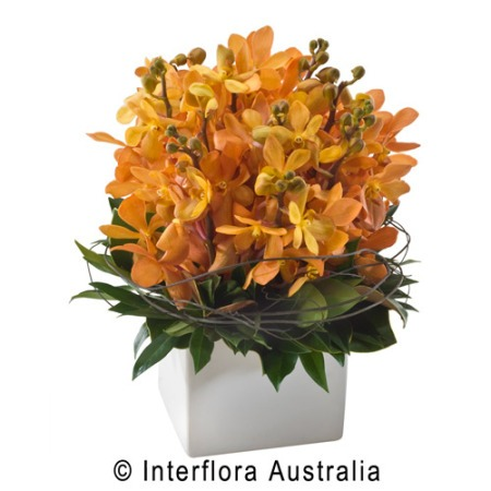 SA72 NICOLA Bright Orchid Arrangement in Ceramic Container