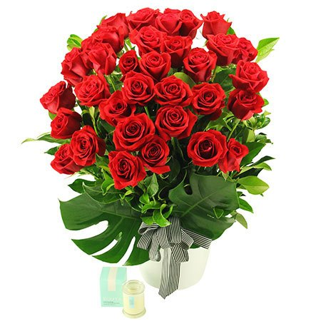 Senorita in Red - 36 Long Stem Red Roses (Sydney Only)